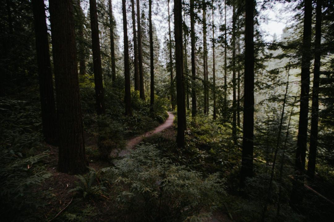 rob-august-photography-portland-painted-hills-hoyt-arboretum-crater-lake-cape-kiwanda-oregon-0017
