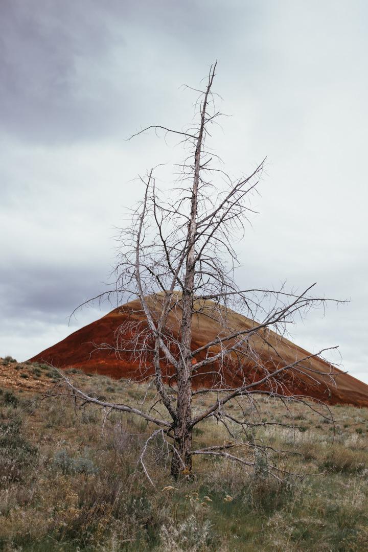 rob-august-photography-portland-painted-hills-hoyt-arboretum-crater-lake-cape-kiwanda-oregon-0030