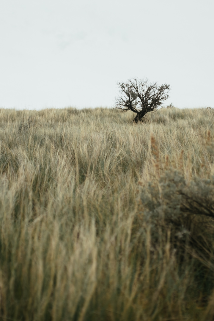 rob-august-photography-portland-painted-hills-hoyt-arboretum-crater-lake-cape-kiwanda-oregon-0031