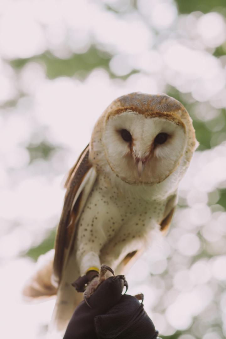 rob-august-photography-sara-caleb-owl-lake-mcqueeney-0008